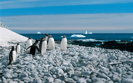 Albatros' store togt til Antarktis - Det Syvende Kontinent